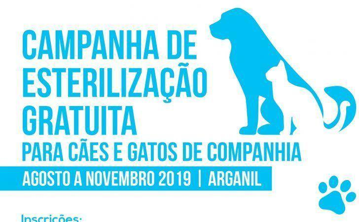 Município de Arganil promove campanha de esterilização gratuita de animais de companhia
