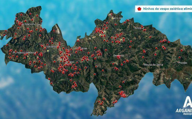 290 ninhos de vespa asiática destruídos no concelho de Arganil em 2020